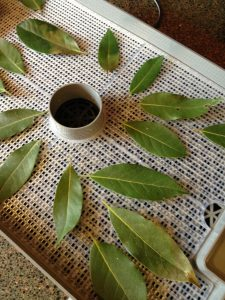 bay leaves on mesh tray