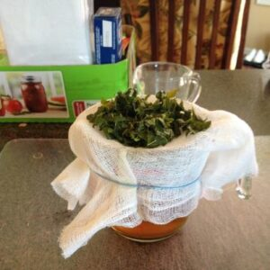 strain mint